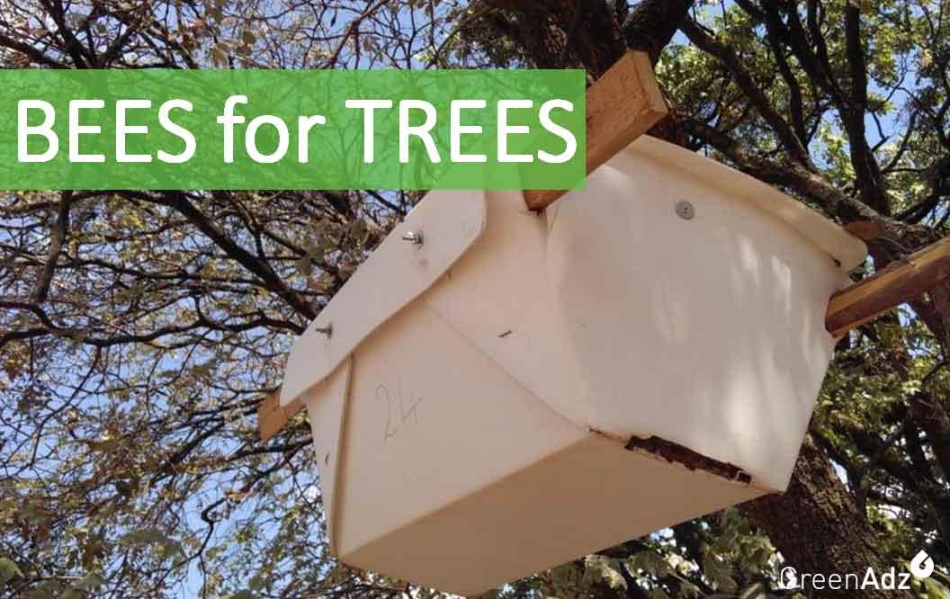 Bees for Trees - mit Bienen den Regenwald unterstützen