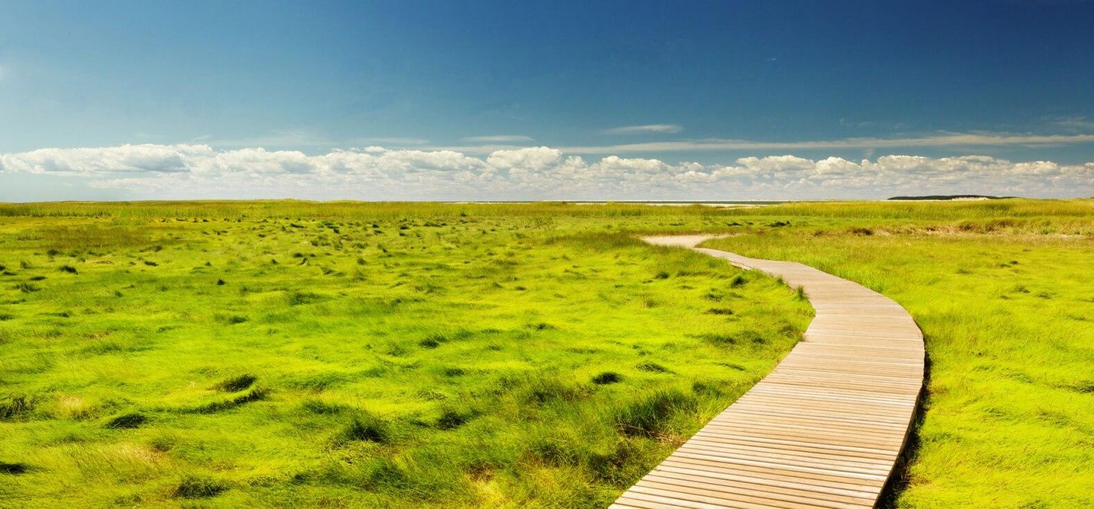GreenAdz Customer Insights und Customer Feedback auf Augenhöhe mit Baumspende als Incentivierung und unaufdringlich eingebunden